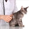 Ветеринарные клиники в Вадинске